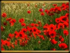 Serenade - Richard Clayderman.mpg - YouTube