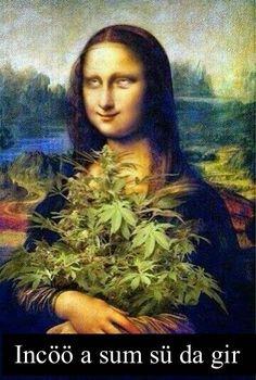 Mona's Colorado harvest