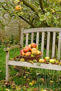 Weathered Bench with basket of crisp apples...what could be better.