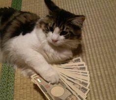 お金を引き寄せる♪
