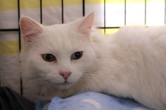 """Beautiful """"Harmony""""  will be up for adoption near the end of the week."""
