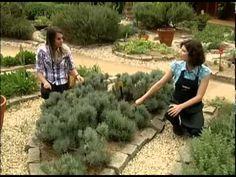 Conheça a produção do viveiro Sabor de Fazenda e aprenda a fazer uma horta em casa - YouTube