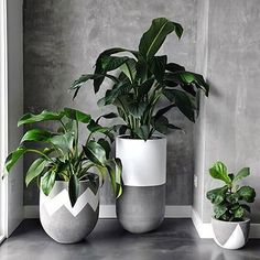 58 DIY Plant Stand ideas to Fill Your Living Room With Greenery - Plant Pot - Ideas of Plant Pot - living room decoration plant stand decor greenery decoration plants indoor living room Green Plants, Potted Plants, Indoor Plants, Foliage Plants, Indoor Gardening, Concrete Plant Pots, Concrete Planters, Wall Planters, Succulent Planters