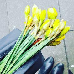 Frühling für Zuhause #endlichfrühling #springtime #esgehtlos #Frühling #love #frühlingfürzuhause #springcollection #springstyle #narzissen #shopping  #osterglocken #flowers #blumen #neuesaison #shoppen #blumen #abindenfrühling #saisonopening #newin #newlook #neu #neuerlook #spring2016 #aufbruch #spring #sommer #newfashion