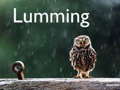 LUMMING Meaning: Heavy rain.Origin: Early 1900sAs in: Christ, it's absolutely lumming down.