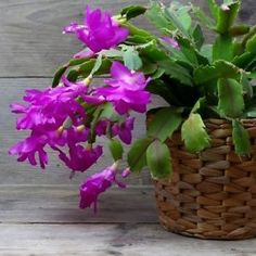 Design an indoor garden space with these stunning flowering houseplants and you will hardly miss the summer garden.