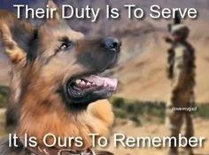 This is a beautiful war-time story. 3 stray dogs saved 50 soldiers in Afghanistan. 2 of these lovely dogs were brought to the US to live with the soldiers! **Please watch video for full story. Military Working Dogs, Military Dogs, Police Dogs, Military Police, Military Service, Army, Animals And Pets, Cute Animals, War Dogs