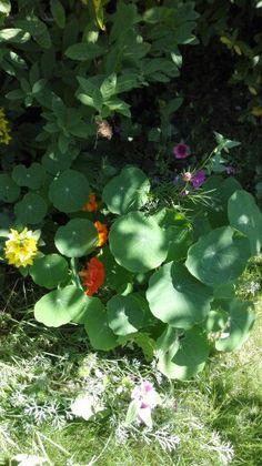 Awesome An einer versteckten Ecke im Garten finde ich diese Sch nheiten