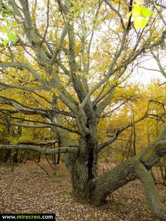 Ruta otoñal por la laguna del Campillo, Rivas Vaciamadrid, Parque regional del Sureste,  Madrid  #senderismo   #madrid   #rivasvaciamadrid   #turismo   #excursiones   #hiking   #trips   #mirecreo