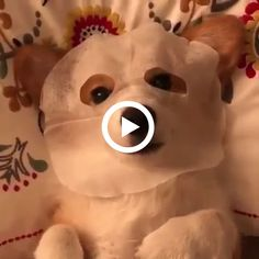 Pawsworld is the portal to your little cute friends world. Cute Baby Animals, Animals And Pets, Funny Animals, Fluffy Corgi, Cute Pugs, Pembroke Welsh Corgi, Cute Friends, Cute Babies, Sleeping Beauty