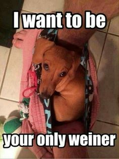 U will be my only Weiner,promise