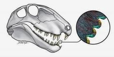 'Steak-knife' teeth reveal ecology of oldest land predators | #GeologyPage