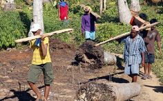 Typhoon Hagupit: an update on damage to agriculture