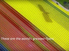 """Is the airline's new """"World's Greatest Flyers"""" campaign inspiring or irritating?"""