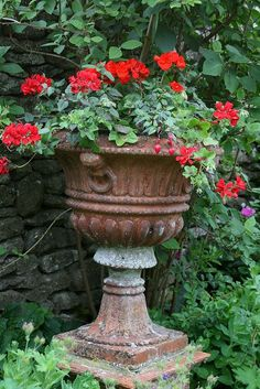 Red geraniums in a rusty cast iron urn. exactly my garden! Container Plants, Container Gardening, Beautiful Gardens, Beautiful Flowers, Urn Planters, Red Geraniums, Garden Urns, Pergola Lighting, Summer Flowers