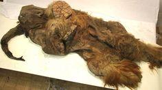 mammoth preservation siberia