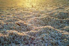Shells on a Sanibel Island beach