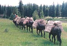 mule pack saddle equipment | ... packing because they each had different packing abilities mules can