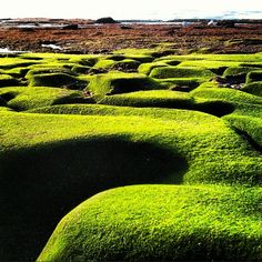 Mossy seaweed on wave worn rocks at low tide (La Jolla, CA). M double M: January instagrams (photography).