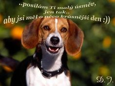If a dog will not look at you after having looked you in your face, you should go home an examine your conscience. Pets, Pet Dogs, Doggies, Basset Artesien Normand, Beagle Pictures, Funny Pictures, Medium Sized Dogs Breeds, Cute Beagles, Popular Dog Breeds