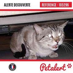 09.03.2017 / Chat / Toulouse / Haute-Garonne / France