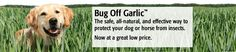 Bug Off Garlic Insect Repellent Products Bug Off, Insect Repellent, Fleas, Dog Treats, Spring Time, Bugs, Your Dog, Garlic, Animals