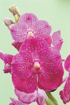 Evitar os vasos de plástico, regar adequadamente, cuidar dos brotos, esterilizar a tesoura e outras dicas práticas e caseiras para cuidar de orquídeas, segundo especialista. Gosta de paisagismo? Confira!