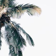 Swinging palms // via @coconutcomradery