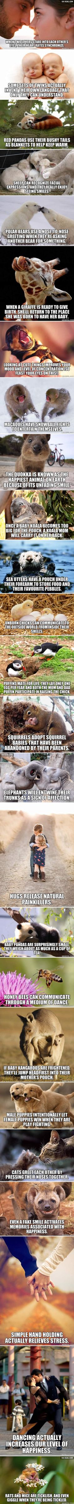 Funny lol -- 26 Amazingly Sweet And Scientific Facts The More You Know, Good To Know, Did You Know, Wtf Fun Facts, Crazy Facts, Random Facts, Happy Facts, Random Stuff, Strange Facts