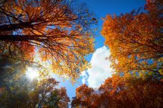 Glorious Autumn Time by WildRoseLandscapes on Etsy, $10.00