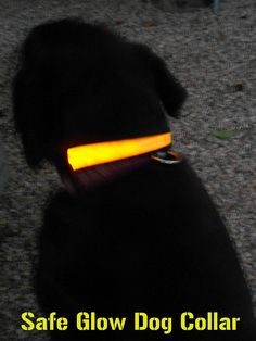Safe Glow Dog Collar review - awesome safety item for those with dogs from Handbook of Nature Study.