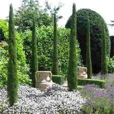 Resultado de imagen de italian conifers