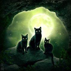 Black Cat Art, Black Cats, Types Of Cats, Three Cats, Halloween Images, Cat Boarding, Warrior Cats, Cat Sitting, Illustrations