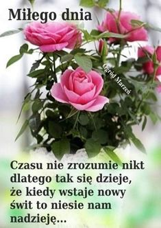 Good Day, Good Morning, Weekend Humor, Romantic Love Quotes, Motto, Plants, Pictures, Den, Beautiful Things