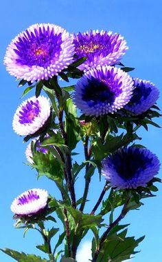 Advice For Growing Beautiful Flowers, Produce And Other Plants - Useful Garden Ideas Strange Flowers, Unusual Flowers, Rare Flowers, Types Of Flowers, Flowers Nature, Amazing Flowers, Purple Flowers, Beautiful Flowers, Weird Plants