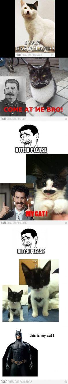 Batman cat :P