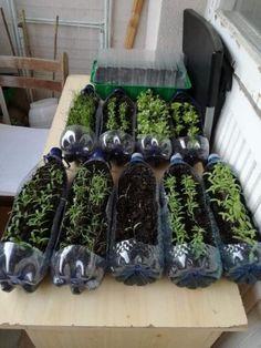 Big Garden, Garden Inspiration, Wine Rack, Seeds, Home Decor, Vegetable Garden, Backyard Farming, Decoration Home, Room Decor
