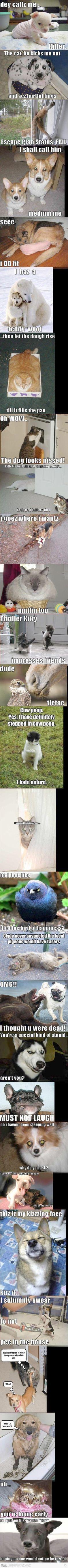 Impressive -> Cute Animals Memes xxx
