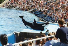 SeaWorld Goes on the Defensive Trying to Minimize Damage from Proposed 'Blackfish' Bill: http://onegr.pl/1h9RnJM