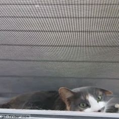 Cat Stuck in Screen Door | Gif Finder – Find and Share funny animated gifs