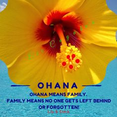 Ohana heard from the movie Lilo & Stitch. Gumamela - Philippine name- photo taken at NorthRiver Yacht Club.