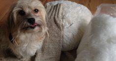 Hunde-Blog von Stefanie Gaugl: So macht man ein Hundebettchen - weekend.at Blog, Animals, Meat, Pet Dogs, Animales, Animaux, Blogging, Animal, Animais
