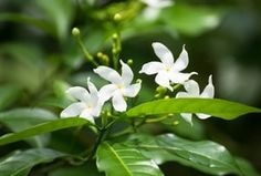 15 fleurs parfumées pour le jardin