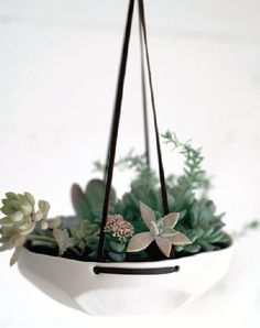 Terrarium--similar to the German Advent wreath but more permanent