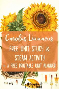Learn about the art and science of Carolus Linnaeus with a fun and free unit study! Science Curriculum, Homeschool Curriculum, Homeschooling Resources, Homeschool Books, Steam Activities, Science Activities, Science Worksheets, Nature Activities, Montessori Art