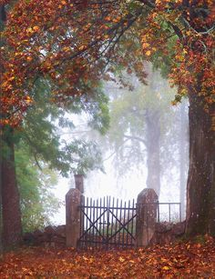 """""""The Gateway"""" by Ann Thomstad on 500px - Autumn is a beautiful season. I especially like this photograph."""