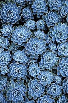 Comment vous dire tout est bleu ... On aime ce tableau végétal de jolies plantes grasses vert bleu. Une belle façon de vous faire plaisir et de décorer votre maison. - leblogdelamechanceté