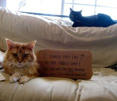 Community: Cat-Shaming At Its Best