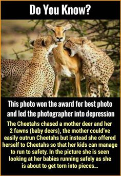 That's sad/ Who the fk is cutting onions eh? Beautiful Creatures, Animals Beautiful, Cute Animals, Wow Facts, Weird Facts, Animal Slaughter, Stories That Will Make You Cry, Shocking Facts, Unbelievable Facts