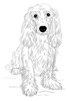 How to Draw Dogs -Draw a Cocker Spaniel - Easy Step by Step Drawing Tutorial - Learn How To Draw A Dog and Cute Puppies - Cartoon and Realistic Animals Perro Cocker Spaniel, English Cocker Spaniel, Dog Drawing Tutorial, Pencil Drawing Tutorials, Drawing Lessons, Drawing Techniques, Drawing Tips, Drawing Ideas, Perros Jack Russell